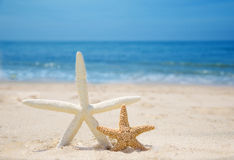 Two Starfishes on a beach. Two Starfishes on a sandy beach by the ocean Stock Photography