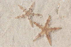 Two Starfishes on The Beach Stock Photo