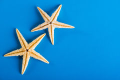Two starfishes. On blue background Stock Image