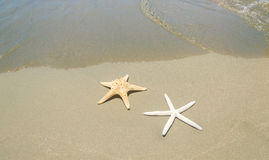Two starfishes next to sea Stock Images