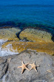 Two starfishes next to sea Royalty Free Stock Images