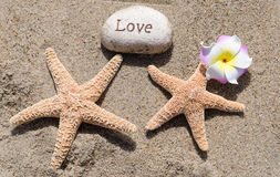 Two Starfishes with rock on the beach Stock Photo