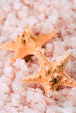 Two starfishes and sea salt Stock Photography