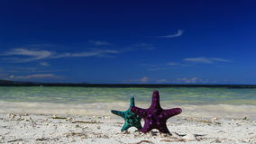Two Starfishes on tropical beach. Footage stock video footage