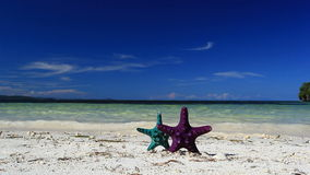 Two Starfishes on tropical beach. Footage stock video