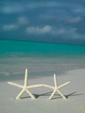 Two starfishs on the beach Royalty Free Stock Photography