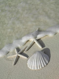 Two starfishs on the beach. Two starfishs and sea shell on the beach Stock Images