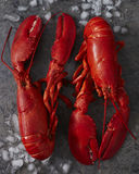 Two steamed maine lobsters on ice stock photos