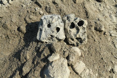 Two stone-like skull. Two similar stone excavated ancient skull. Fragments of the slag-like skull Royalty Free Stock Images