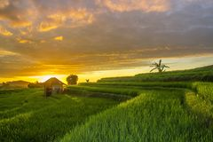 Two stones in the middle of a fierce sea with wavesbeautiful rice fields in the afternoon in Indonesia in the bengkulu area. Indonesian natural beauty in the stock images