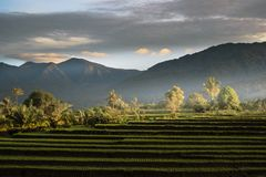 Two stones in the middle of a fierce sea with wavesbeautiful rice fields in the afternoon in Indonesia in the bengkulu areaIndones. Indonesian natural beauty in stock photography