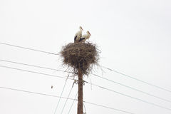 Two stork nest of. Two beautiful stork nest of Stock Image
