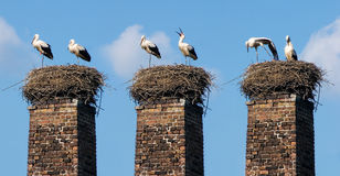 Two Storks Stock Photo