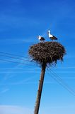 Two storks. Storks in nest Stock Photography