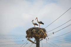 Two storks and blue sky Royalty Free Stock Images