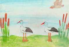 Two storks. Child`s drawing. Two storks and bulrush. Child`s drawing. Watercolor on paper Stock Images