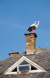 Two storks on chimney Stock Images