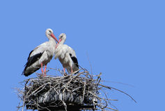 Two storks in the nest Royalty Free Stock Images