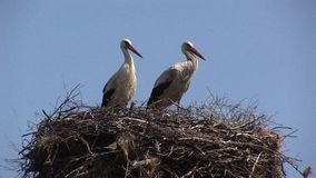 Two storks on nest in Bulgaria stock video