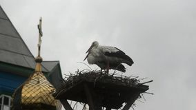 Two storks in the nest. The nest is near the dome of the church. Storks in the background of a white sky. There is a cross on the dome stock footage