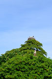 Two storks nests on top of  tree. Two storks nests with storks on top of  tree Royalty Free Stock Photos