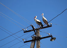 Two storks sit on a column Royalty Free Stock Photo