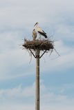 Two storks on their nest Stock Photos