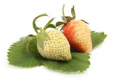 Two strawberries Stock Photos
