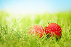 Two strawberries on the grass stock images