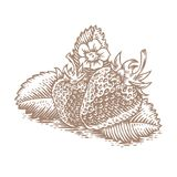 Two strawberries with leaves and flower. Drawing of two fresh strawberries with leaves and flower Stock Photo