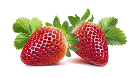 Two strawberries with many leaves isolated on white background royalty free stock image