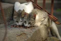 Two stray cats Royalty Free Stock Photos