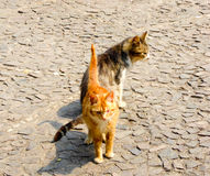 Two stray cats Royalty Free Stock Photo