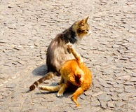 Two stray cats Royalty Free Stock Photography