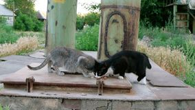Two stray cats feeding near pipes stock video footage