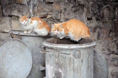 Two Stray Cats on Garbage Bins Stock Photos