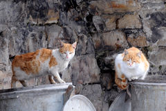 Two Stray Cats on Garbage Containers Stock Photos