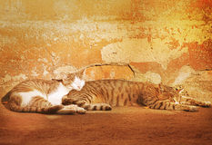 Two stray cats. Stock Images