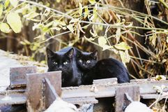 Two stray cats sit on the street stock photography