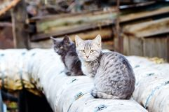 Two stray cats sit on the street royalty free stock image