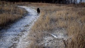 Two stray dogs run in snow away from camera stock video