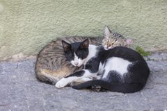 Two stray kitten sleeping in the street. In summer in Porto, Portugal Royalty Free Stock Photos