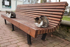 Two street cats sit on the bench in park Royalty Free Stock Photography