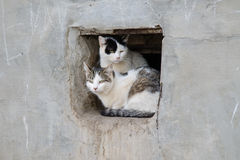 Two street cats sit in square hole the wall Royalty Free Stock Photography