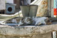 Two street cats on well with an old bucket Royalty Free Stock Photography