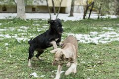 Two street dogs royalty free stock images