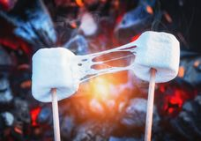 Two stretchy marshmallows roasting over fire flames. Marshmallow on skewers roasted on charcoals.  Stock Photos