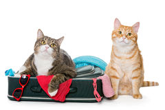 Two striped cat lying with a suitcase. For a holiday trip stock images