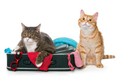Two striped cat lying with a suitcase Royalty Free Stock Photography