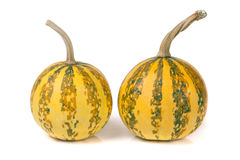 Two striped decorative pumpkins isolated on white background Stock Photography